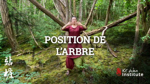 Position de l'arbre